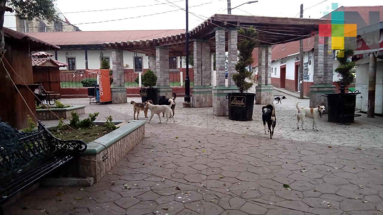 Realizarán campaña para concientizar sobre el cuidado animal, en Huayacocotla
