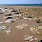 Investigadores de la UV ven bien prohibición del uso de bolsas de plástico y popotes