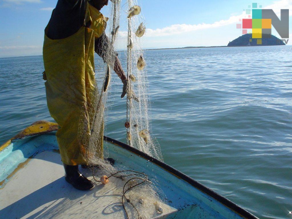 El 26 de mayo iniciará veda del camarón en sistemas lagunarios y estuarinos del Golfo de México