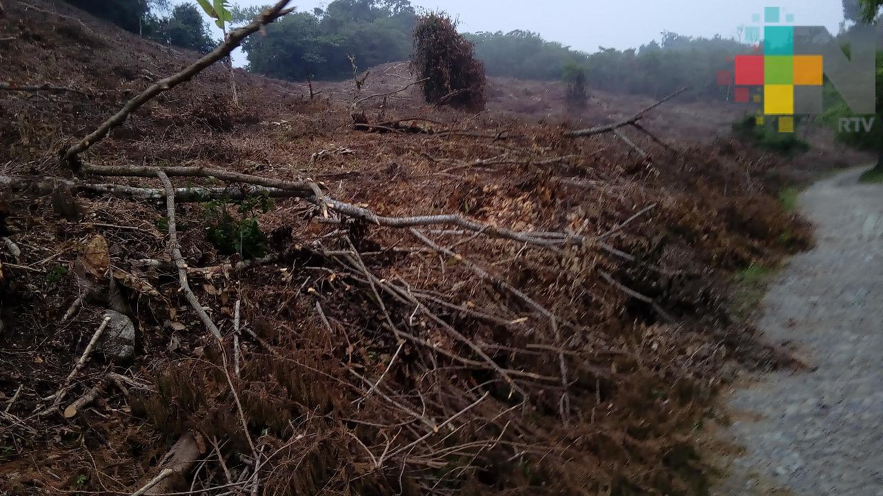 Estiaje afecta a Ilamatlán