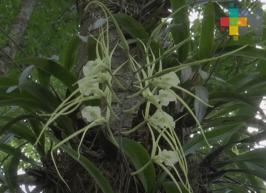 """En Xalapa realizan foro """"Plantas epifitas: diversidad, ecología y conservación"""""""