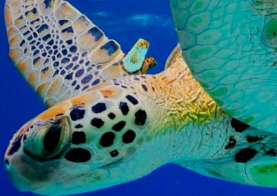 México comprometido con el ambiente; duplica áreas marinas protegidas