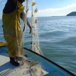 Inicia temporada de veda para la pesca del camarón en el Golfo de México y mar Caribe
