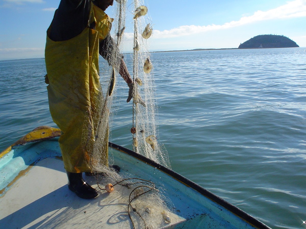 Extienden veda de camarón hasta el 17 de septiembre