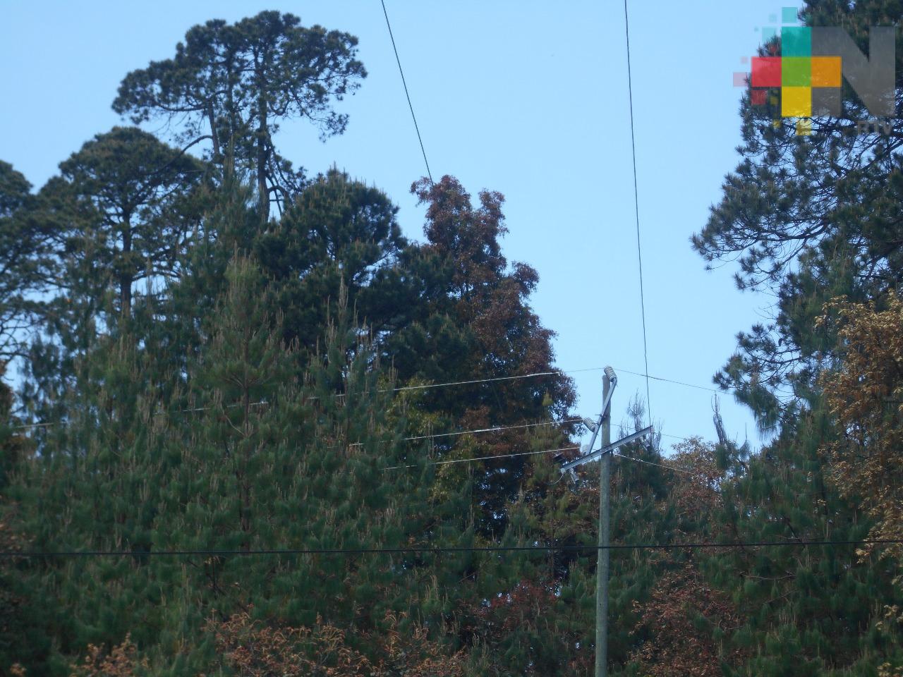 CFE sin dar respuesta a problemática de redes eléctricas en Huayacocotla