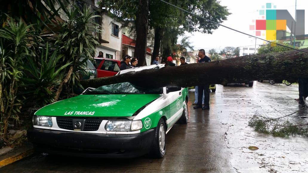 Inundaciones y árboles caídos en Xalapa por lluvia y granizada