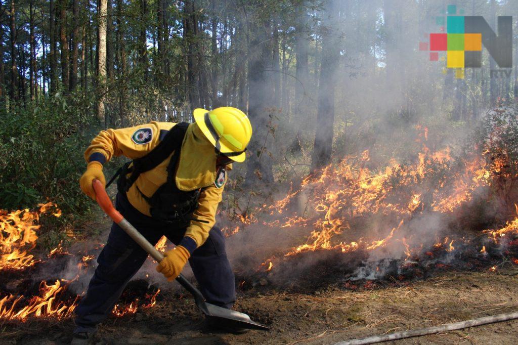 Hoy es el Día Nacional del Combatiente de Incendios Forestales