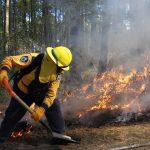 Registra Veracruz una disminución de incendios forestales con respeto al año anterior