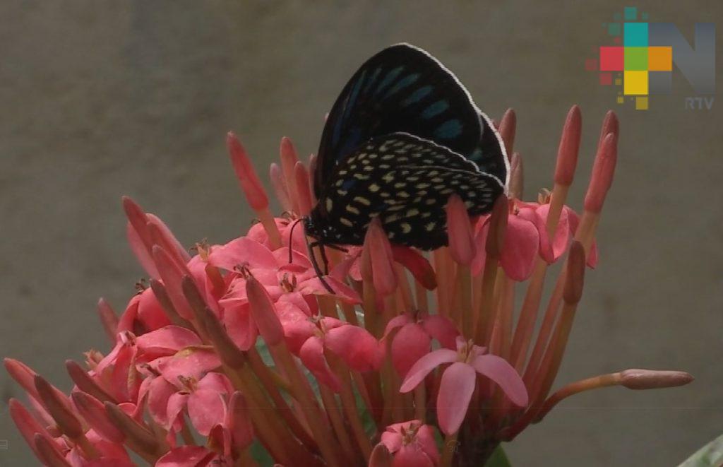 Realizará Inecol curso sobre el manejo de mariposas