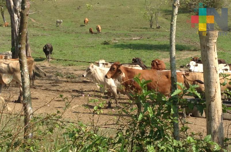Panorama para el sector ganadero mejora a pesar de la pandemia de COVID-19