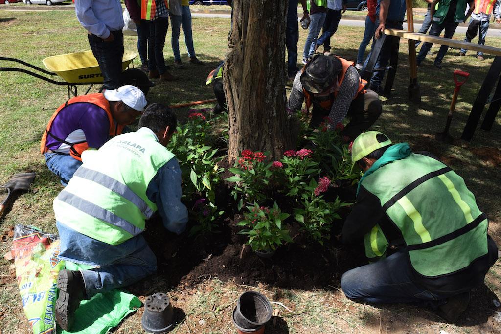 Se plantarán más de dos millones de árboles para recuperar terrenos degradados en Veracruz