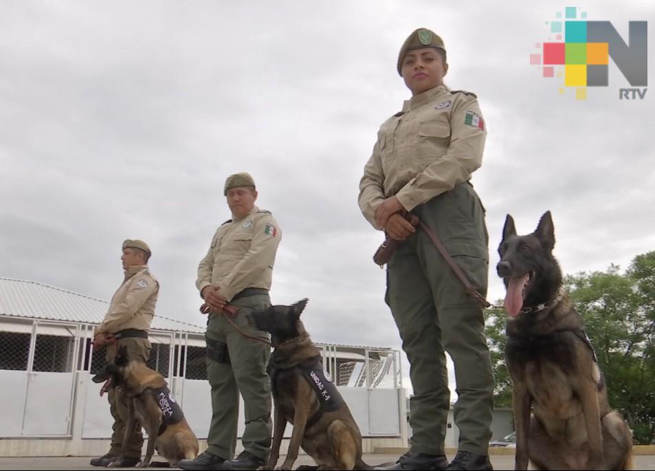 Compañía K9 de la Fuerza Civil, entrenada para proteger a la ciudadanía