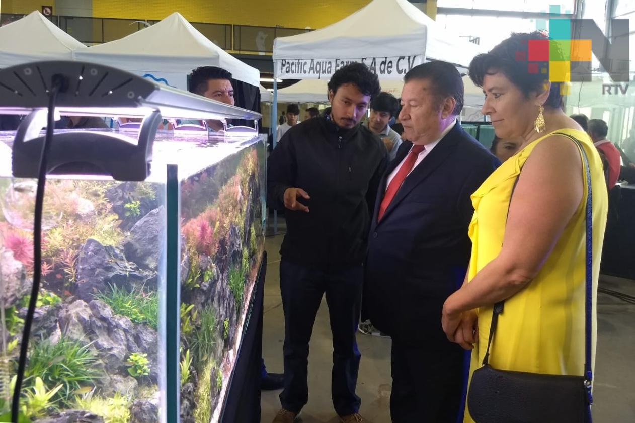 Genera la acuacultura ornamental, ingresos por 140 mdp anuales: Conapesca