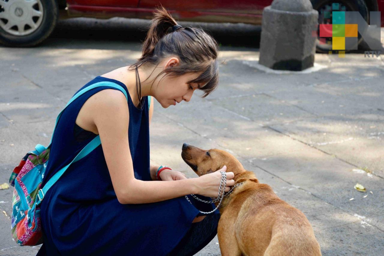 Besar a mascotas podría afectar hígado y pulmones