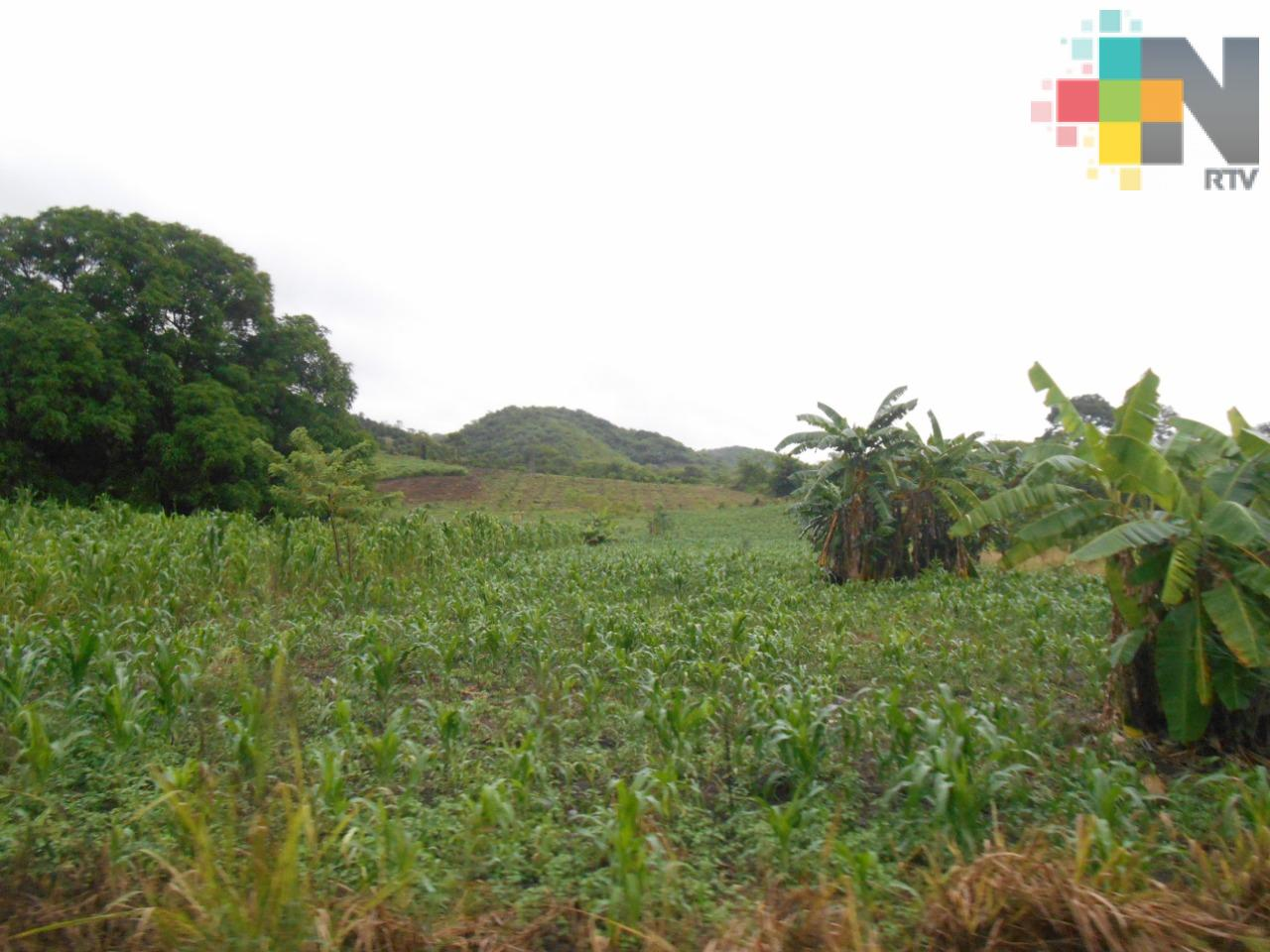Gobernador de Veracruz abroga el decreto que estableció la estrategia Sembrando Bienestar Común