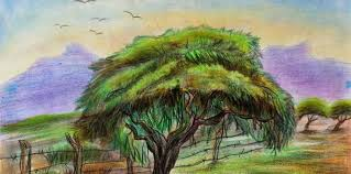 """Cierra convocatoria nacional """"Vamos a pintar un árbol"""""""