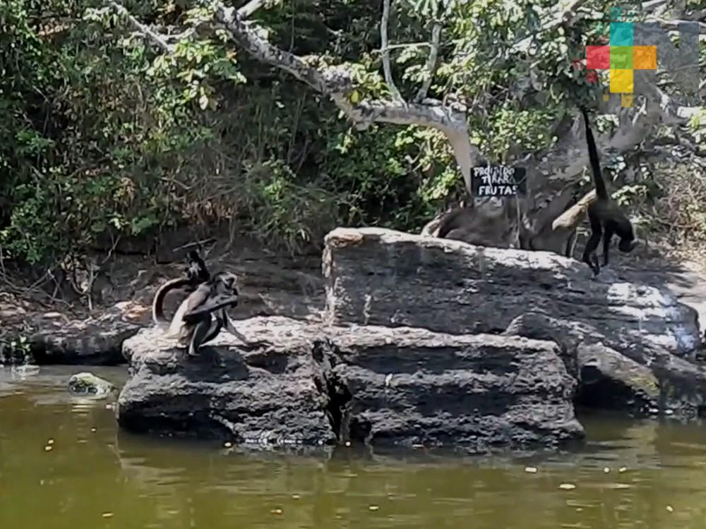 Tráfico ilegal de primates, una amenaza latente para la vida silvestre