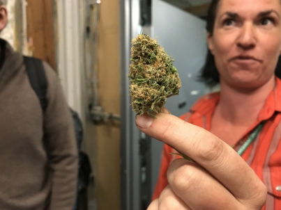 Canadá dará amnistía a enjuiciados por portar cannabis