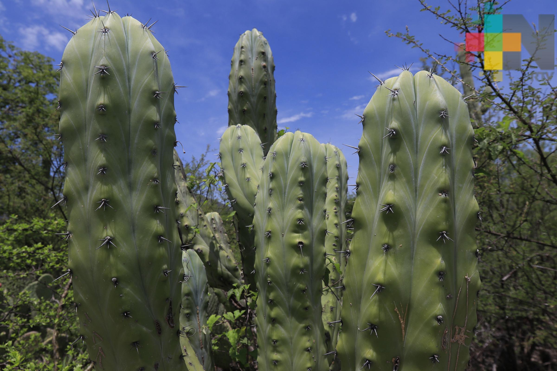 Las plantas perciben agresiones no dolor, aclara experto de la UNAM