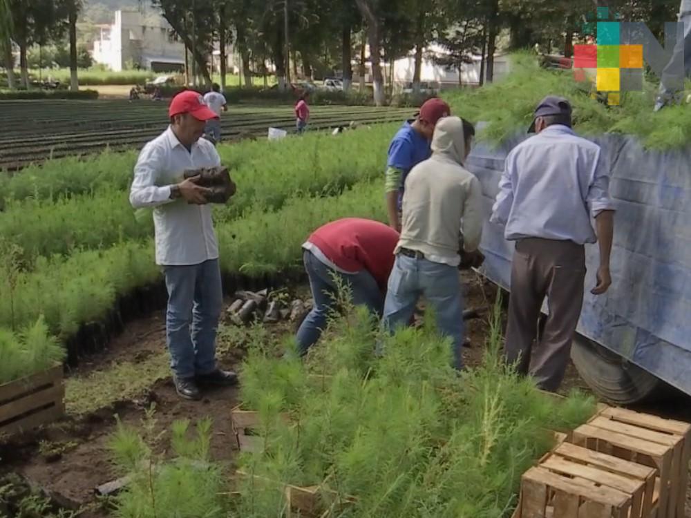 Centro Semillero Forestal de Conafor en Veracruz recibe certificación nacional