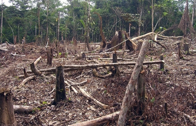 Humanidad, causante de más del 70 por ciento de pérdida de biodiversidad