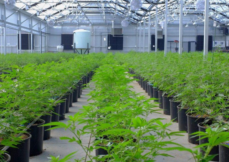 Aurora Cannabis anuncia alianza con mexicana Farmacias Magistrales