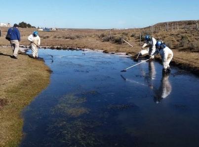 Realizan estudios de microorganismos que degradan petróleo