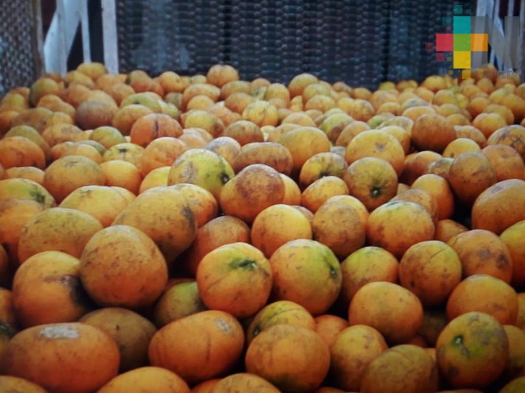 Citricultores solicitan emergencia económica por desplome del precio de la fruta
