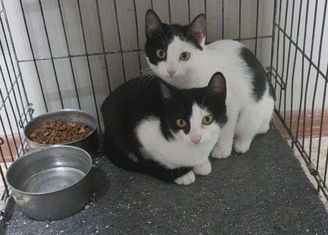 Rescatan a 238 gatos de una casa en Japón