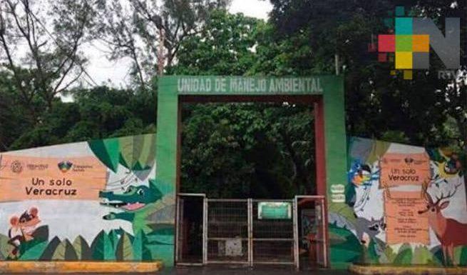 Falso que haya mortandad de especies en zoológico de Veracruz