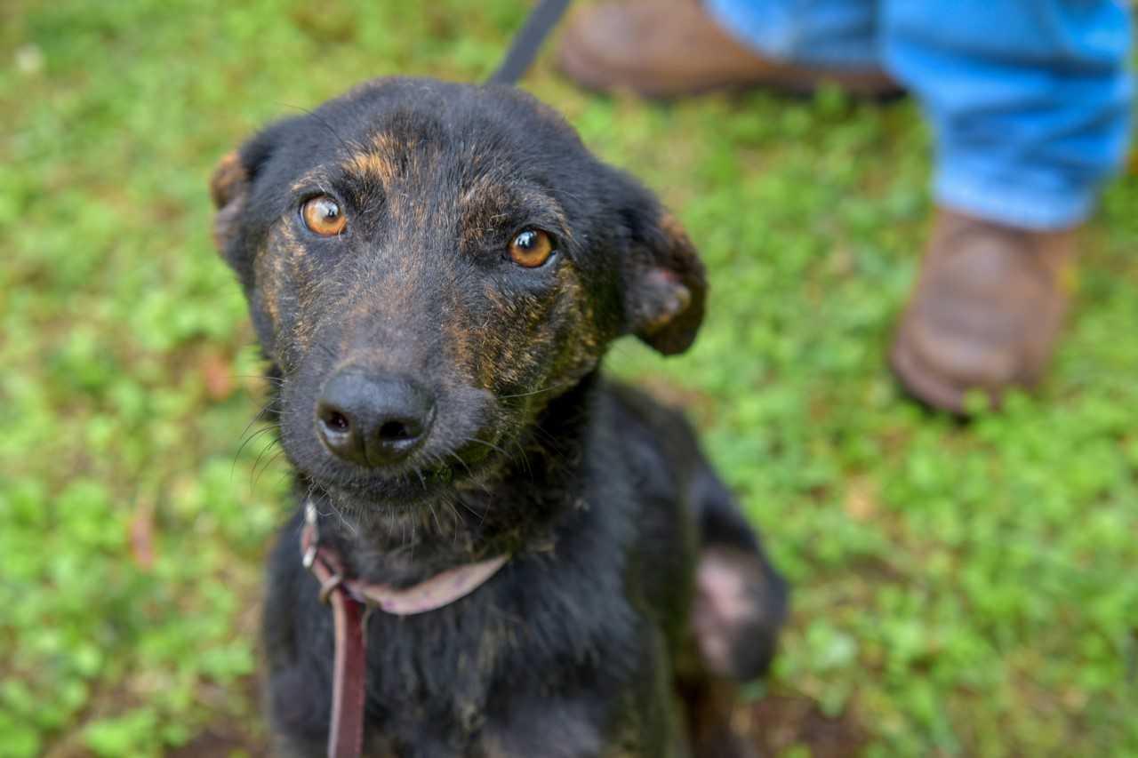Pasarela de adopción de perros, este domingo en Xalapa