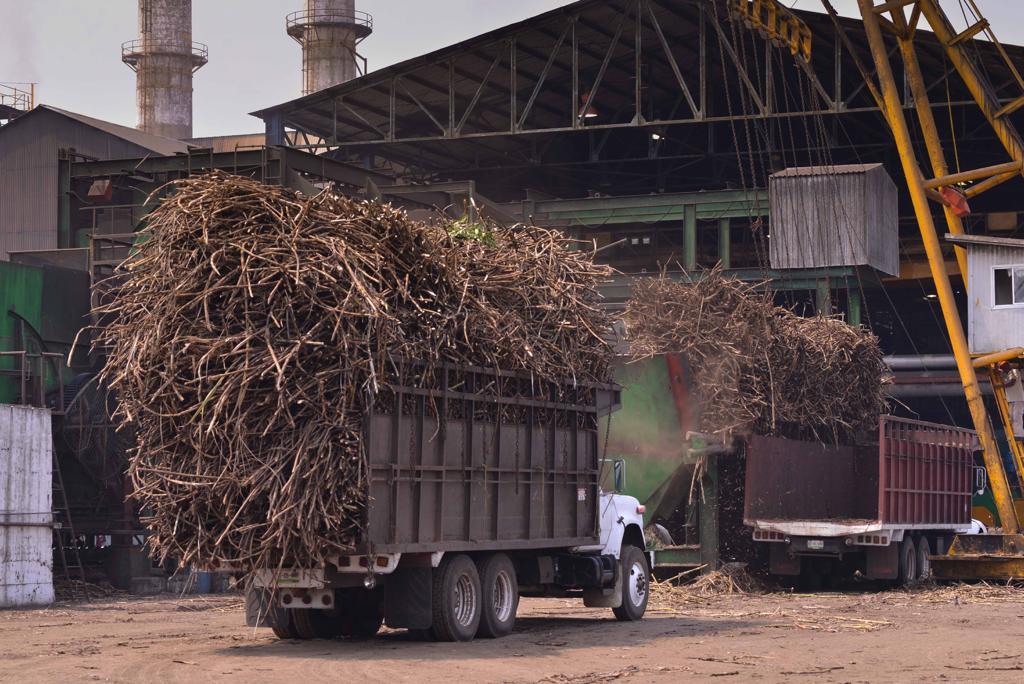 Prevén caída de producción de azúcar en el ingenio San Cristóbal