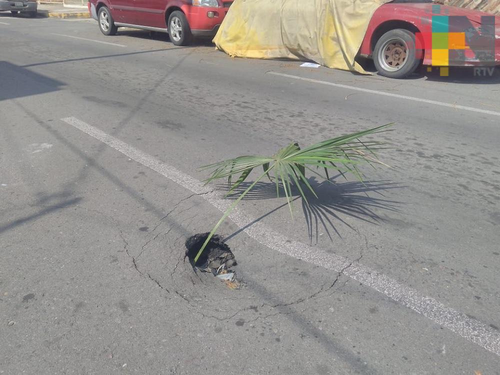 Vecinos reportan socavón y banqueta rota en calles de Veracruz