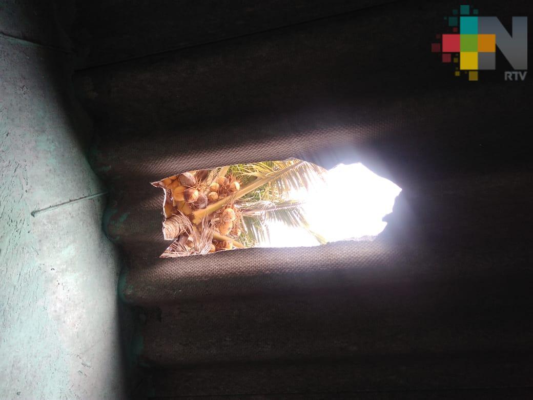 Caída de cocos rompió techo de su vivienda, solicita corte de palmera