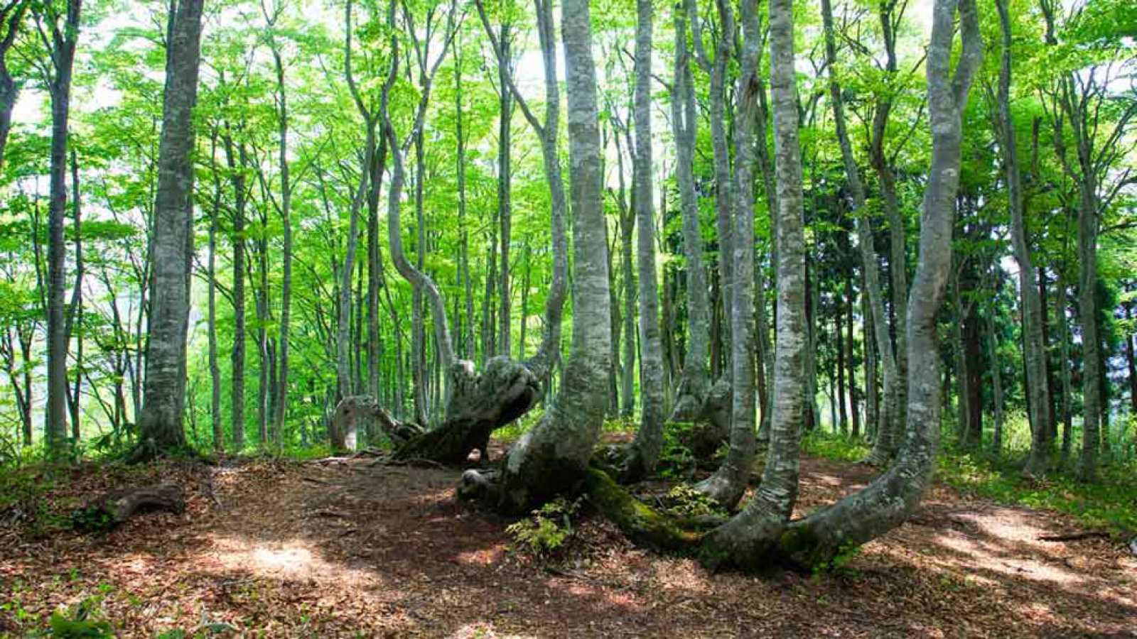 Conmemoran Día Internacional de los Bosques