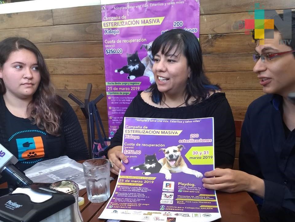 Asociaciones animalistas organizan jornada de esterilización canina y felina en Xalapa