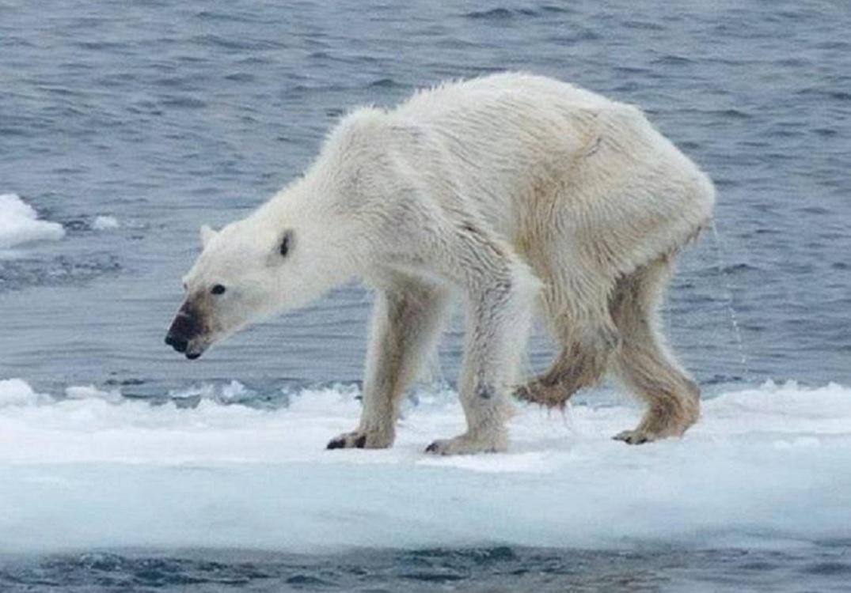 Habitantes en Groenlandia preocupados por el cambio climático