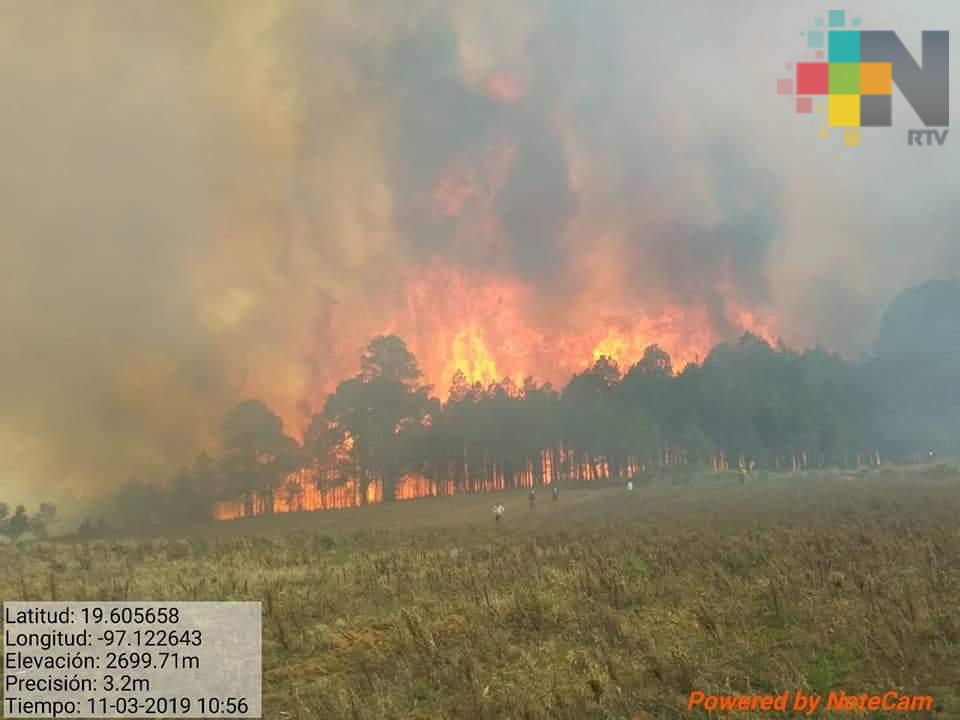 Resultan afectadas 400 hectáreas boscosas por incendio forestal en Las Vigas