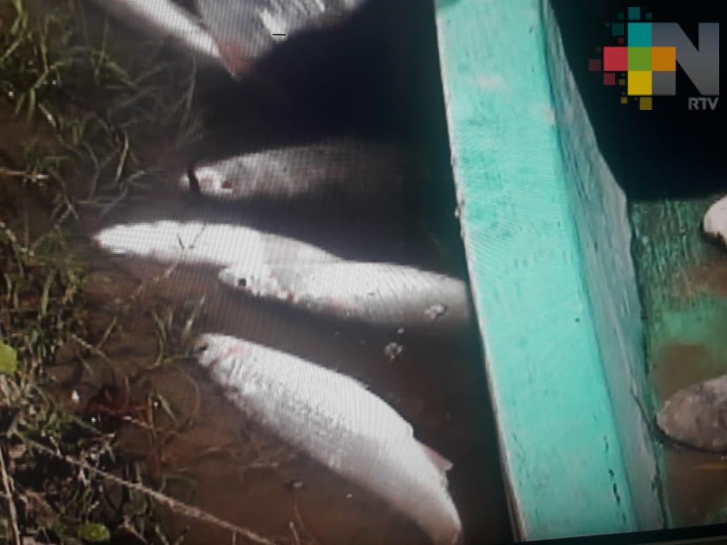 Piden sanción por muerte de peces en el río Bobos