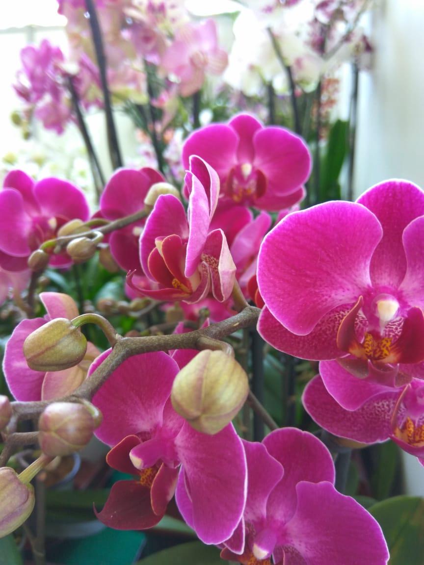 Festival Internacional de la Orquídea