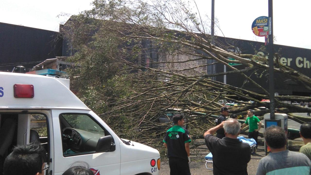 Fuerte viento derriba árbol en esta capital; no hay lesionados