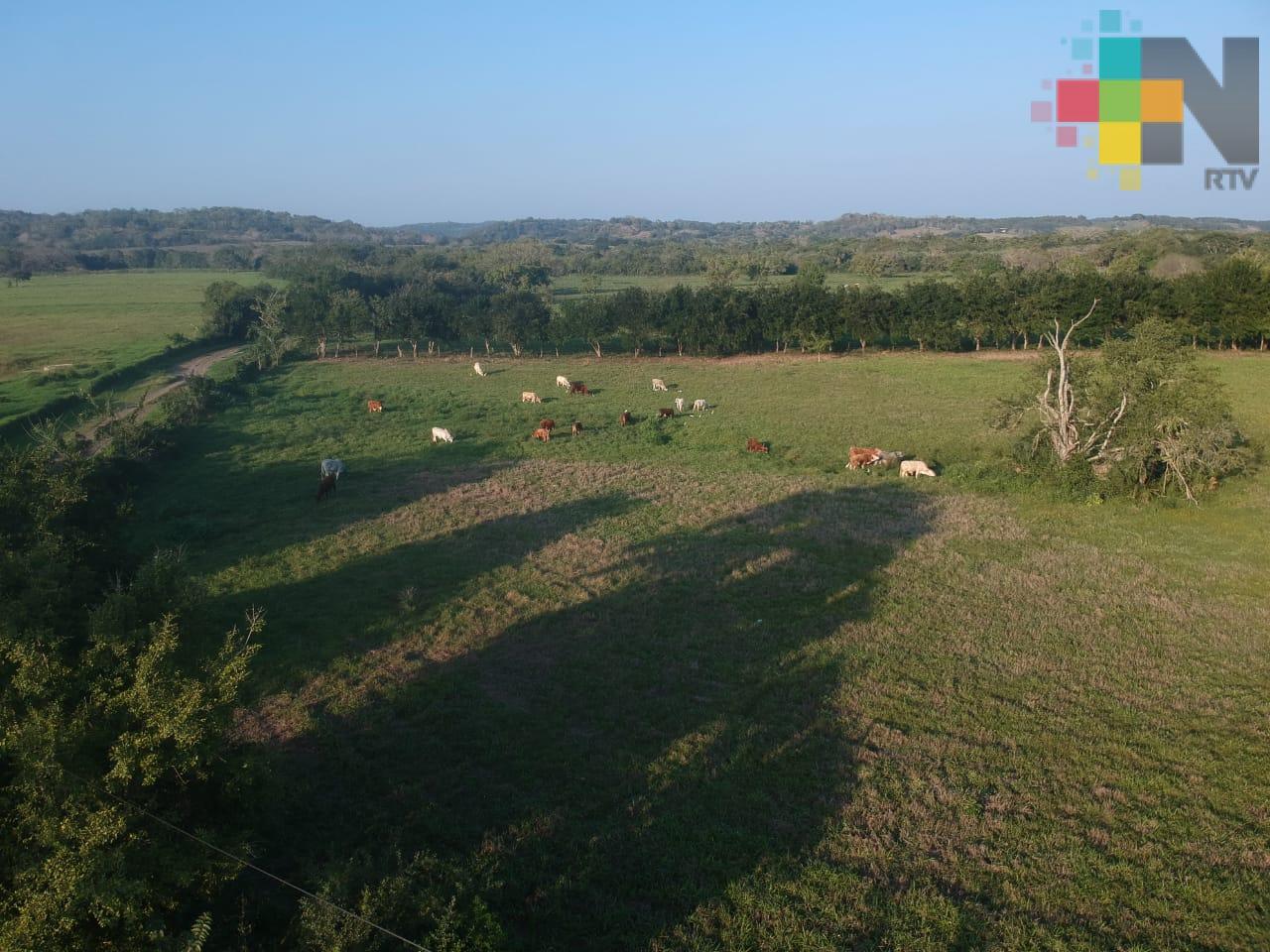 Del 16 al 19 de octubre Sedarpa recibirá solicitudes para apoyar a productores pecuarios veracruzanos