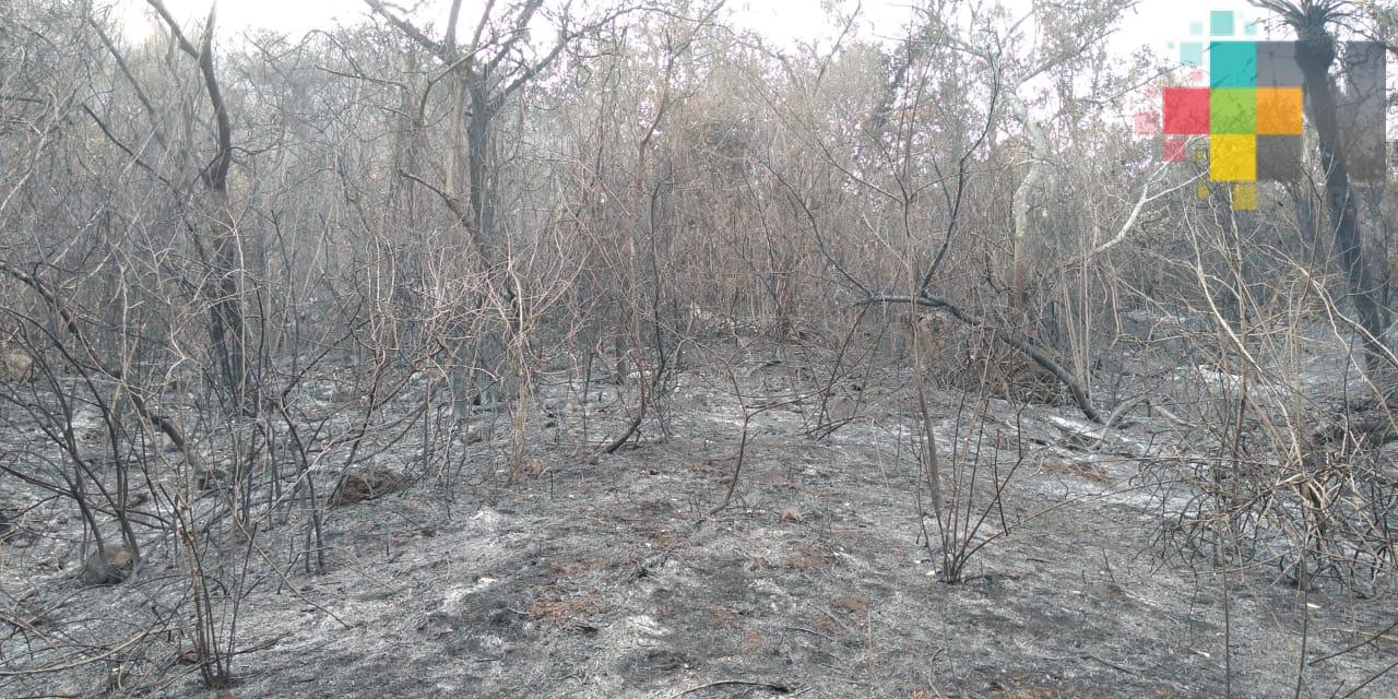 915 hectáreas afectadas por incendio en Alto Lucero