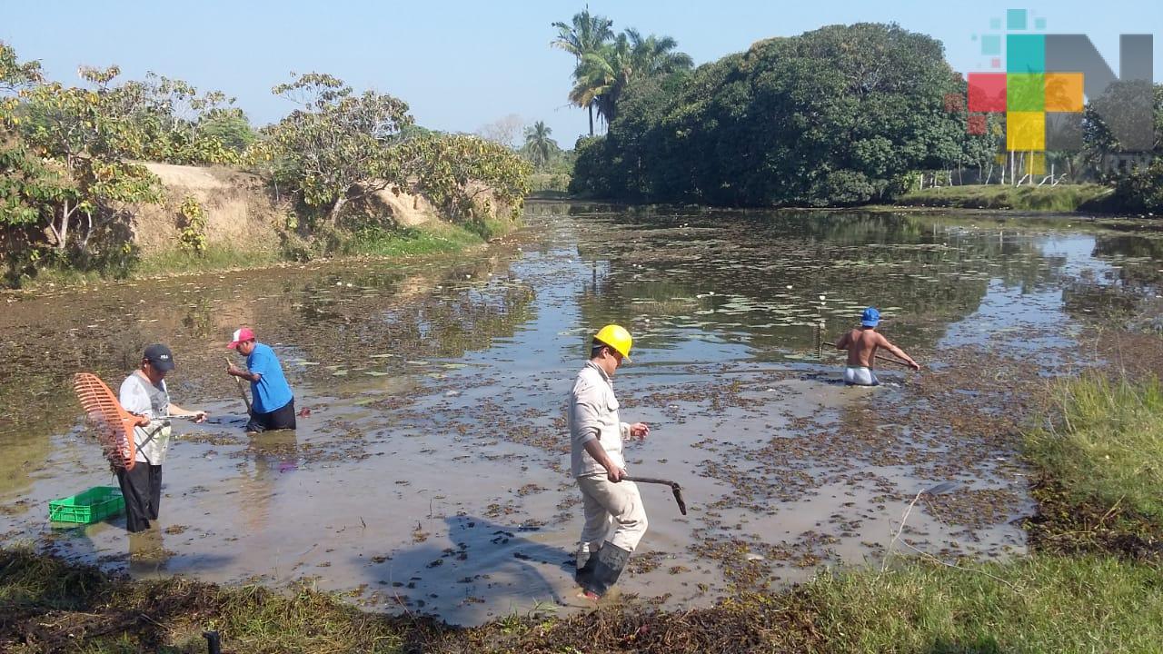 Veracruz, próximo a ser declarado libre de paludismo: SS