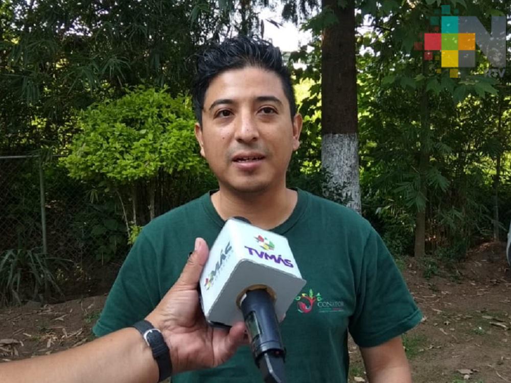 Por trabajos de prevención, estado de Veracruz sin ser de los más afectados por incendios