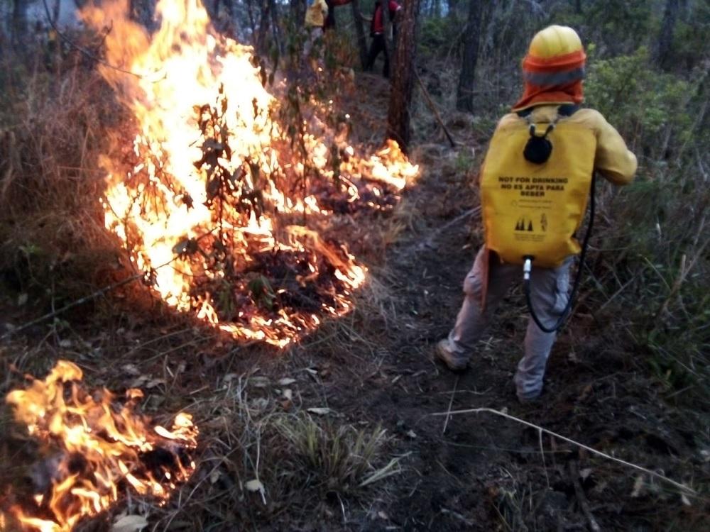Durante la temporada crítica de incendios forestales se han afectado más de 11 mil hectáreas
