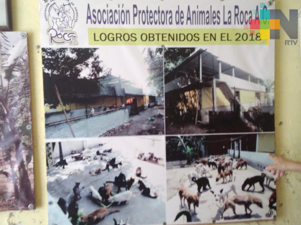 Durante 16 años, La Roca ha protegido perros y gatos en situación de calle