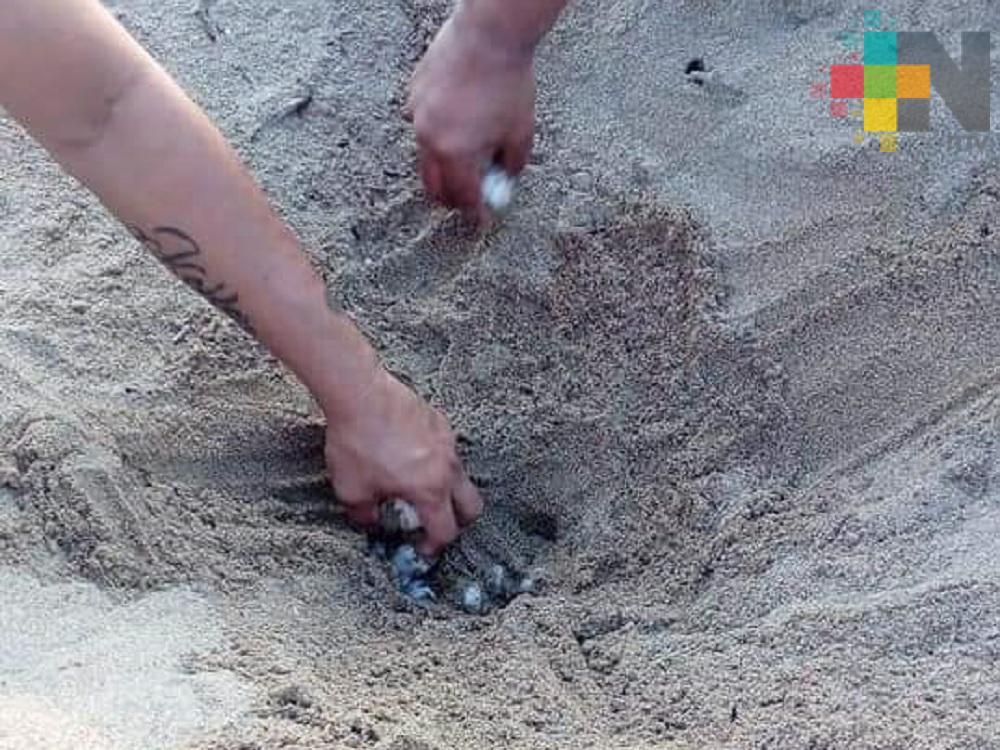 Tortuga deposita más de 100 huevos en playa Villa Allende de Coatzacoalcos