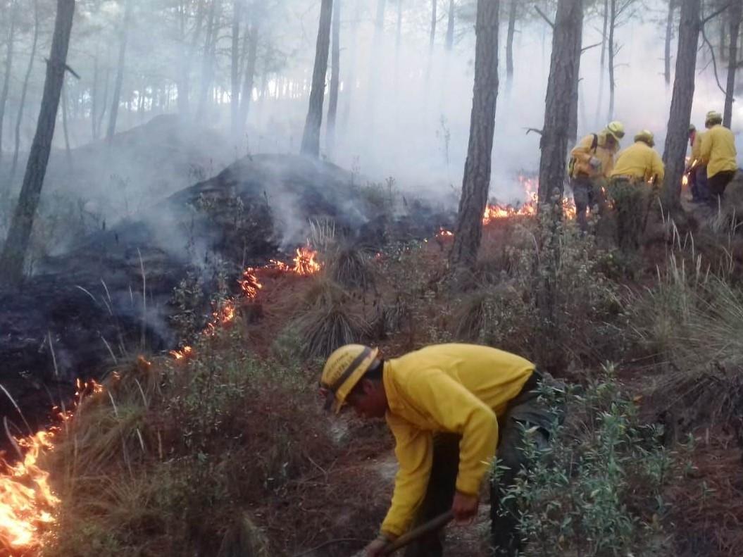 Veracruz registra un total de 109 incendios forestales en este año; la mitad que en 2019: Conafor