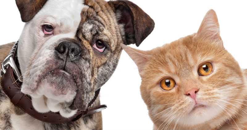Por entregar estadísticas de enfermedad transmitida por gatos y perros a humanos